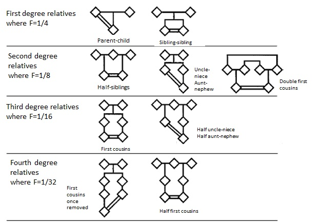 Familial Relations - Pedigree examples
