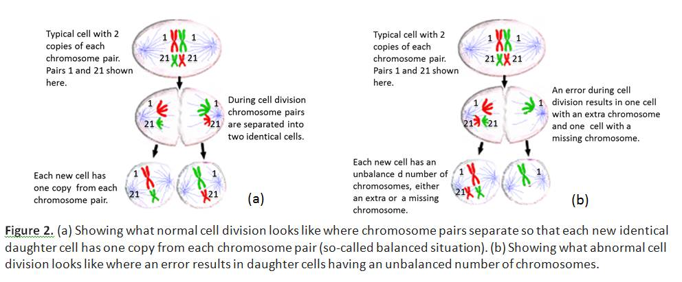 Figure 2. (a) Showing what normal cell division looks like where chromosome pairs separate so that each new identical daughter cell has one copy from each chromosome pair (so-called balanced situation). (b) Showing what abnormal cell division looks like where an error results in daughter cells having an unbalanced number of chromosomes.